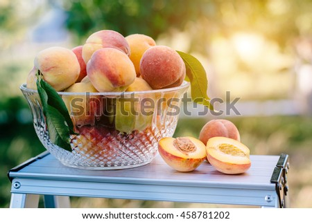 The basket of ripe, juicy peaches placed on the table
