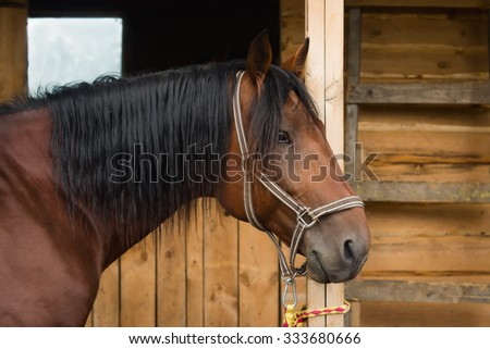 The bay horse in the stable - stock photo
