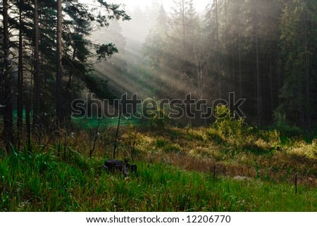 The beams of the sun which are making the way through a wood - stock photo