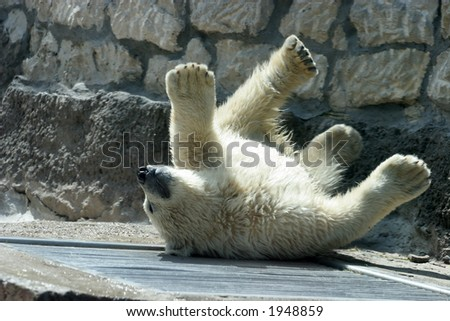 The bear cub plays - stock photo