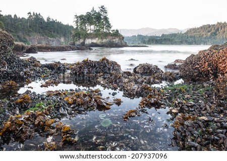 The beautiful and rugged coast of the Olympic peninsula in Washington state borders the Strait of Juan de Fuca and is only a short drive from Seattle. Tide pools, home to many species, are prevalent. - stock photo