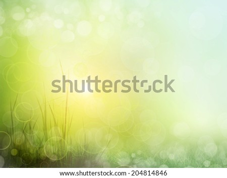 The beautiful backdrop of grass on the background bokeh