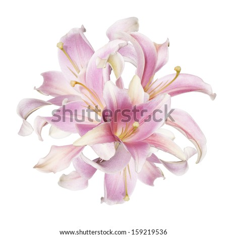The beautiful bouquet pink lily on a white background - stock photo