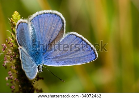 The beautiful bright butterfly sits on a plant. - stock photo