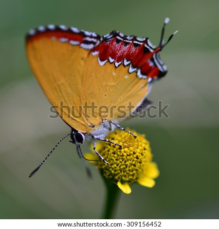 The beautiful butterfly at Pang Si Da National Park, Sakaeo, Thailand (Taken from distance and selective focus point) - stock photo