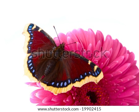 The beautiful butterfly sitting on a flower - stock photo