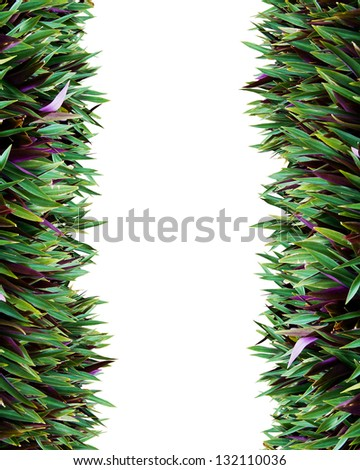 The beautiful decorative plant on the modern wall isolated - stock photo