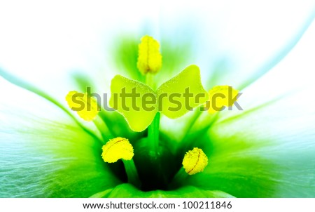 The beautiful flower close up. - stock photo