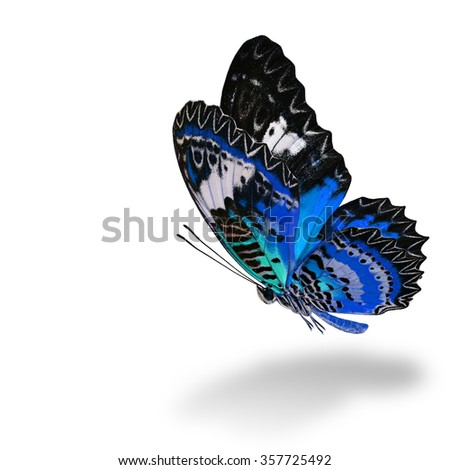 The beautiful flying blue butterfly, Leopard Lacewing butterfly (Cethosia cyane) in fancy color profile on white background with soft shadow beneath - stock photo
