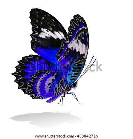 The beautiful flying blue butterfly, Leopard Lacewing butterfly in fancy color profile on white background with all legs body and wings details and soft shadow beneath - stock photo