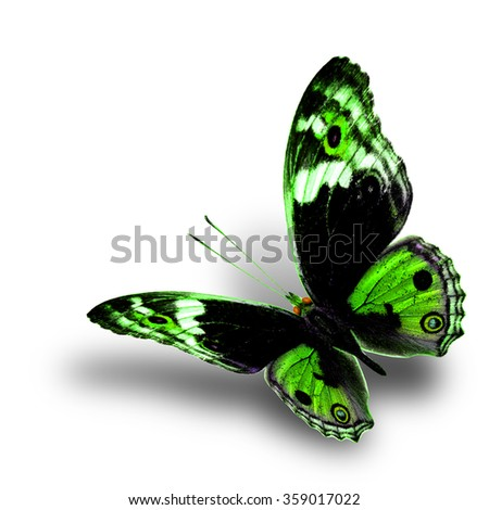 the beautiful flying green butterfly with nice soft shadow beneath on white background, blue pansy butterfly in fancy color profile - stock photo