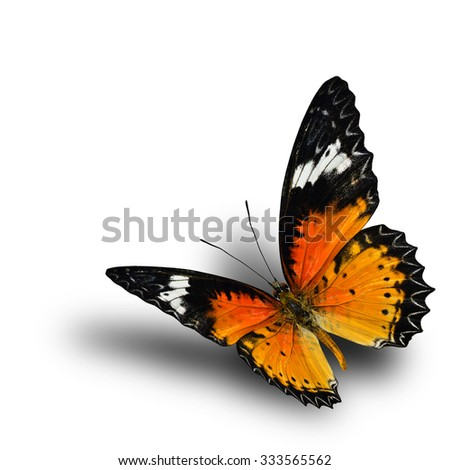 The beautiful flying Leopard Lacewing butterfly with nice shadow beneath on the white background - stock photo