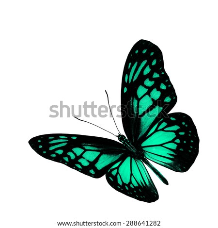 The beautiful flying light green butterfly isolated on white background