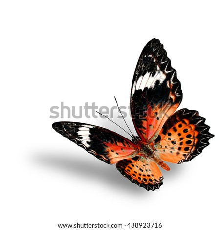 The beautiful flying orange butterfly, female of Leopard Lacewing butterfly in fancyl color profile on white background with soft shadow beneath - stock photo