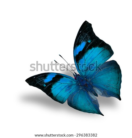 The beautiful flying pale blue butterfly on white background with shadow beneath - stock photo