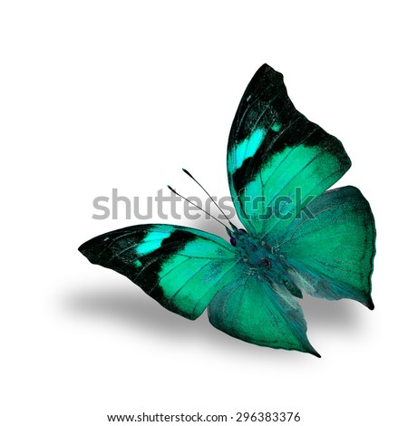 The beautiful flying pale green butterfly on white background with shadow beneath - stock photo