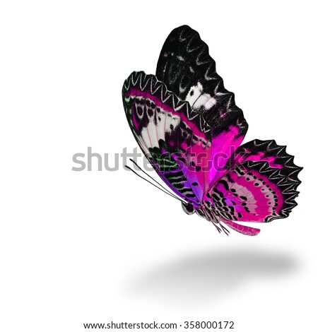 The beautiful flying pink butterfly, Leopard Lacewing butterfly (Cethosia cyane) in fancy color profile on white background with soft shadow beneath - stock photo