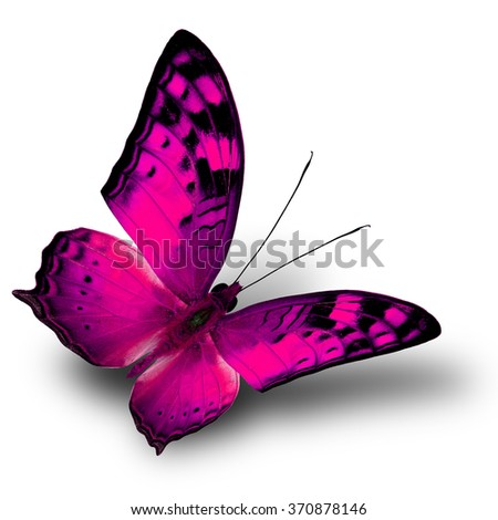 The beautiful flying pink butterfly on white background with shade beneath - stock photo