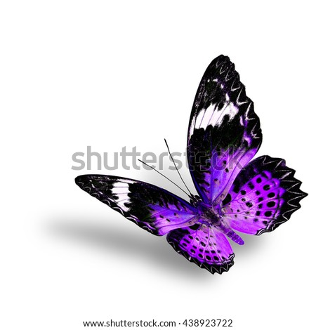 The beautiful flying purple butterfly, female of Leopard Lacewing butterfly in fancyl color profile on white background with soft shadow beneath - stock photo