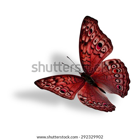 The beautiful flying red butterfly (Junonia atlites ) isolated on white background with soft shadow beneath - stock photo