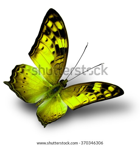 The beautiful flying yellow butterfly on white background with shade beneath - stock photo