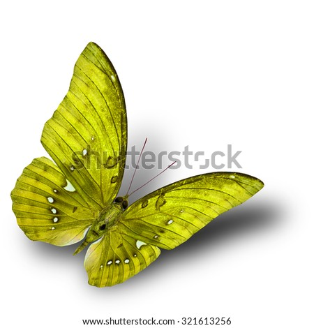 The beautiful flying yellow butterfly on white background with soft shadow beneath - stock photo