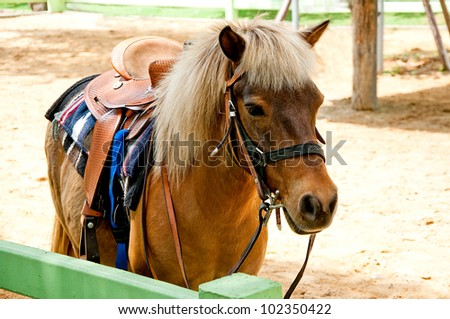 The Beautiful horse - stock photo