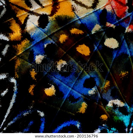 The beautiful multicolor of Leopard Lacewing Butterfly's wing skin in a great background pattern - stock photo