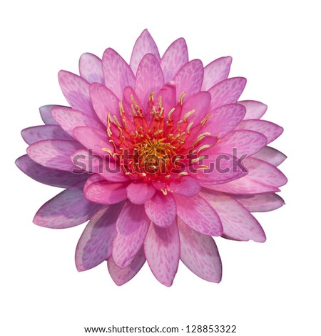 The beautiful pink lotus isolated - stock photo