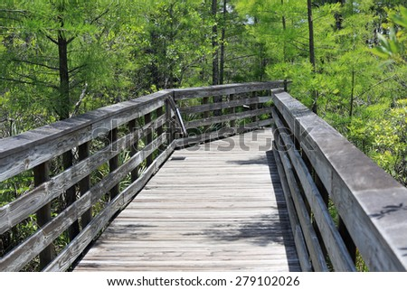 The beautiful raised boardwalk through the cypress swamp in Grassy Waters Park in West Palm Beach, Florida, which is wheelchair accessible. - stock photo