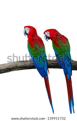 The Beautiful Red-and-green Macaw isolated on white background
