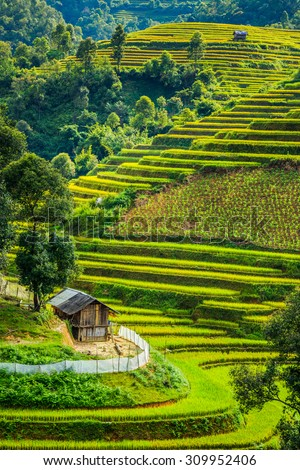 The beautiful Rice terraces valley in Vietnam.