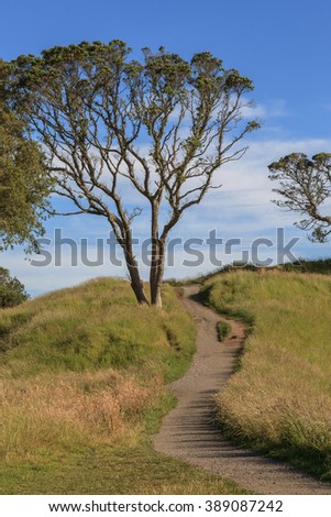 The beautiful scene of walking track beside the big tree on Auckland's Mount Eden. - stock photo