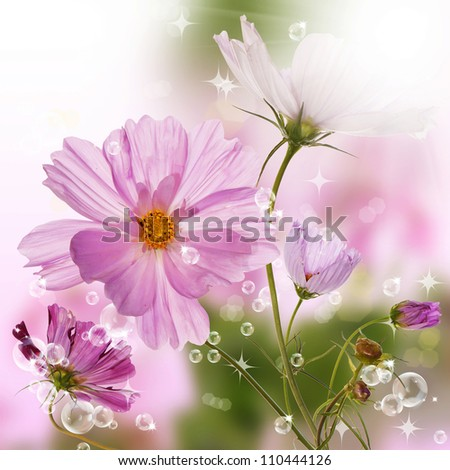 The beautiful spring flower design.Nature backgrounds - stock photo