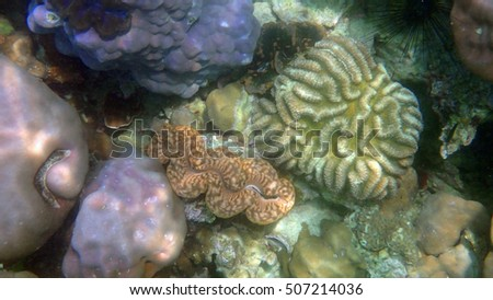 The beautiful underwater world with corals and tropical fish,Andaman,Thailand.
