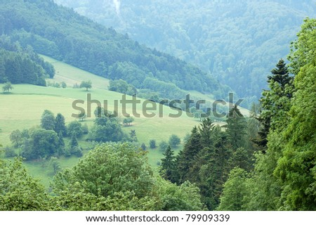 The Beautiful Virgin Black Forest in Germany - stock photo
