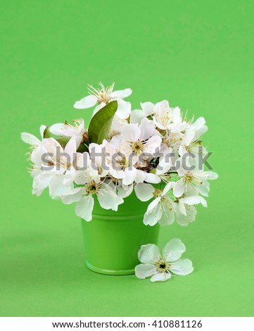 The beauty and fragrance of spring. white cherry blossom flower bouquet on light green background. Spring flowers - cherry branch in vase.  Card with spring flowers. Spring flowers border. - stock photo