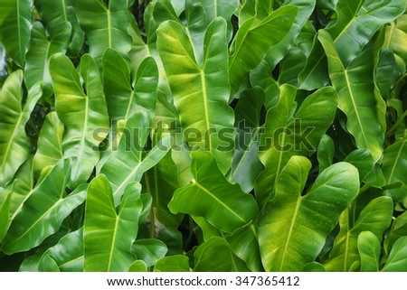 The beauty of the green natural charm and passion of leaves. Obtained from nature around us and around the world.