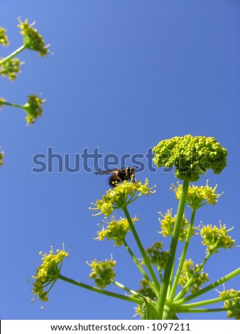 the bee and the flower - stock photo