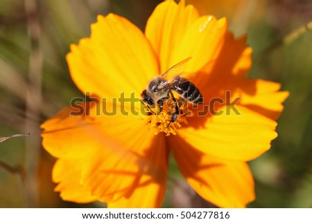 The bee that collects pollen on a yellow flower