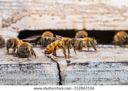 The bees for nectar - stock photo