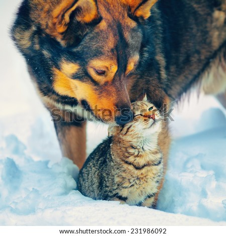 the best friends cat and dog  outdoor in snowy winter - stock photo