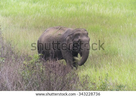 the big elephant in the forest, Khao national Park, Thailand - stock photo