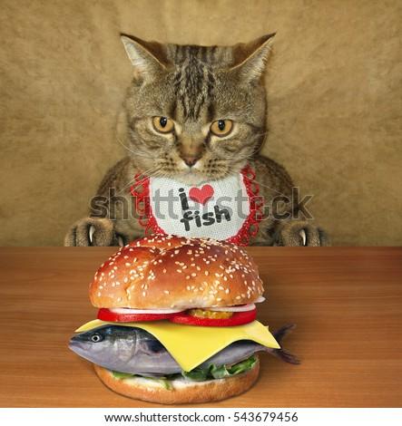 bobcat as a pet