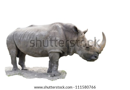 The big rhinoceros -is isolated on the white