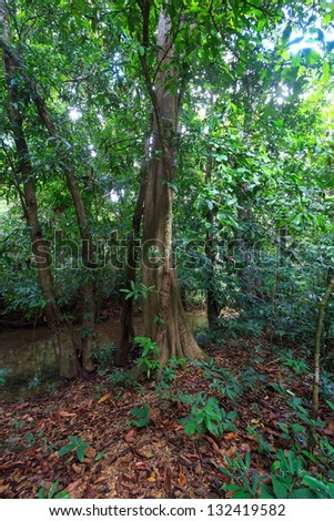The big tree in rain forest - stock photo