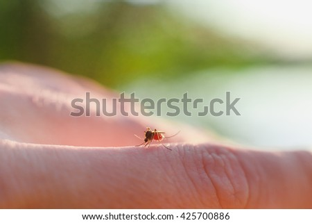 The bite of a mosquito with blood on human body - stock photo