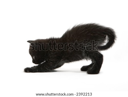 The black kitten plays - stock photo