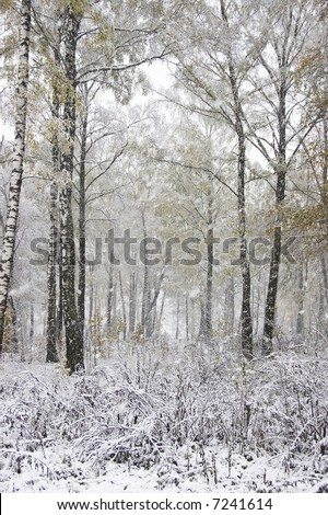 The blizzard in the forest