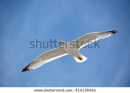 The blue above a yellow-legged seagull/A seagull in flight on a sunny day - stock photo